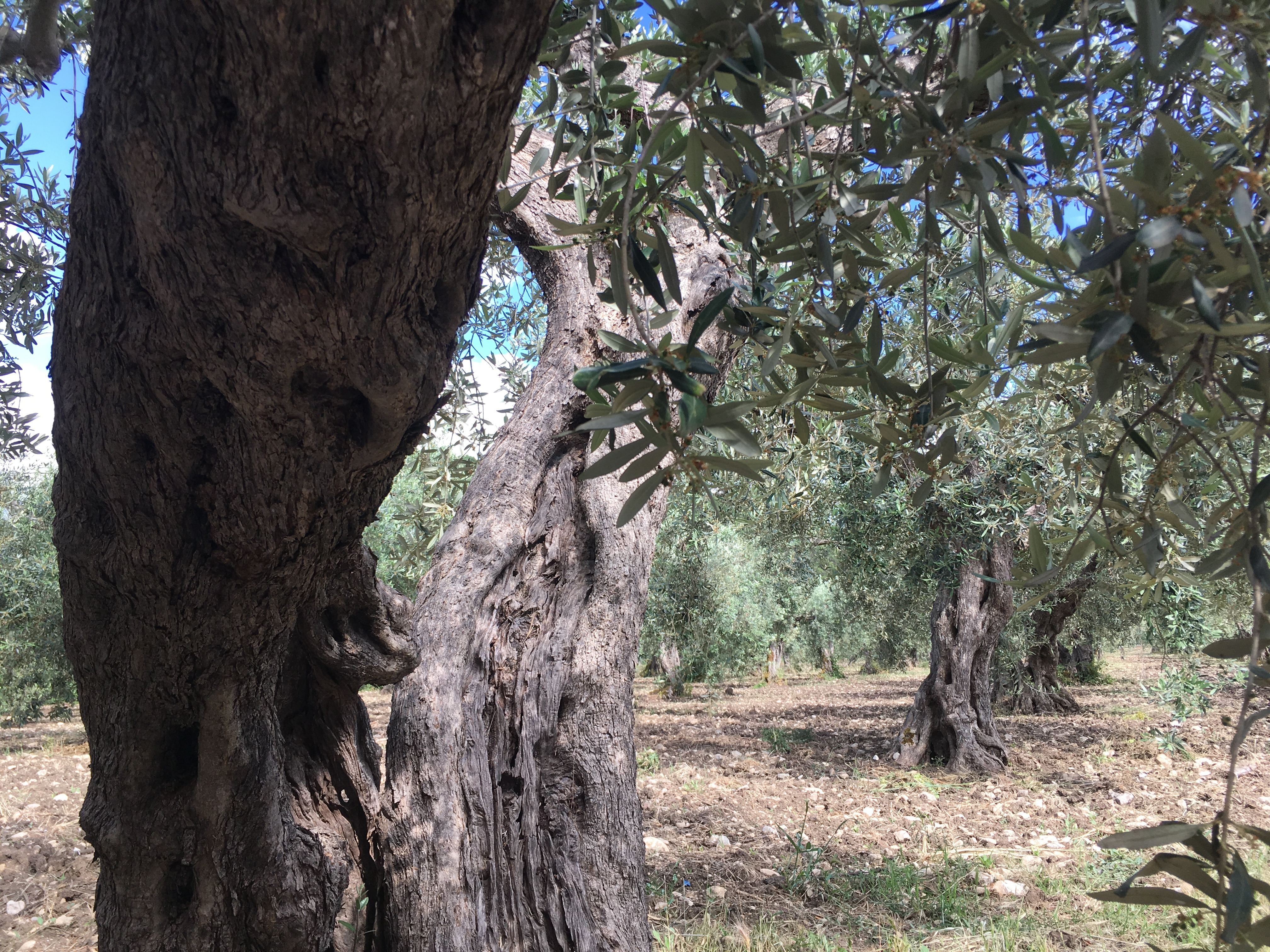 olive trees orange lake sambucca di sicilia snow etna live volcano nature sport lava active fun hiking trekking walking excursionist Sicily mountains forest
