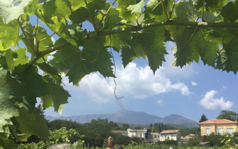 A day on Mt. Etna Volcano to discover Milo's DOC Wine – Etna Bianco Superiore